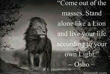 Λιοντάρι!