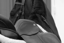HORSE RIDING / by Micaela Maradei