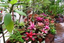 Landscaping & Plants / Ideas for landscaping my Florida home and lanai