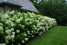 Hedging and border ideas
