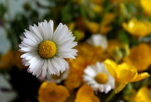 Flowers / by Amanda Sedivy