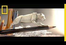 Animation - Videos