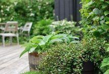 Plantes et balcons