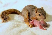 Squirrels........