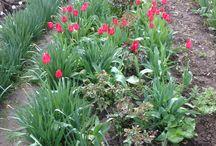Flowers and Gardens / Flowers, gardens scenery,