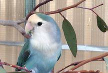 Love my birds!