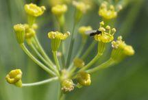 organic gardening / tips and photos for gardeners