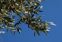 Products of Lake Garda