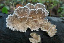 fungi. lichen. moss