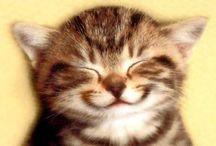 """smile / """"Ami a virágoknak a napfény, az az embereknek a mosoly."""""""
