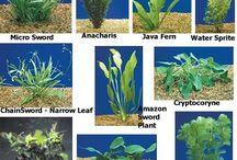 Aquarium planten.