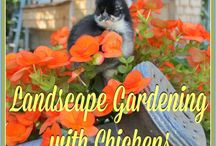 gardening and chickens