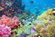 Belize / Interesting places to visit in Belize.