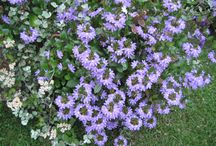 Kukat ja hyötykasvit kotona
