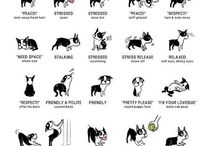 Doggy  / ...some tips when I get my adorable puppy...
