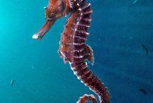 Życie podmorskie
