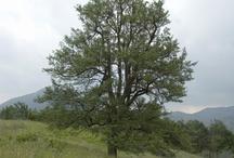 Capanne di Marcarolo natural park