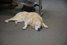 Office Dogs! / We love our office dogs.