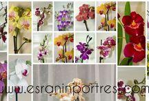 Çiçekler ve bakımları