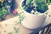 Plants'n'things