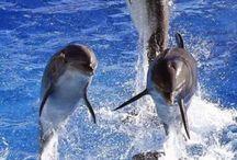 Ψάρρια-θαλασσινά