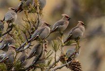Bird / by Neyse Lima