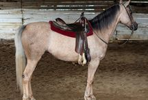 Sooty - Dark Manes and Tails / A less common pattern for sootiness is to have it concentrate on the mane and tail. There is a fair bit of visual overlap between this type of sootiness and the type seen in horses where the legs are very dark.