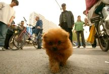 Street animals of China / From illegal impromptu pet shops, to glove eating goats in Buddhist monasteries, this collection features various animal encounters on the streets of China.  MORE: http://www.upi.com/News_Photos/Features/Street-animals-of-China/fp/6553/#ixzz3JcJStIkV