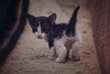 baby animal  so cute ...