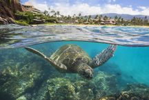 A day in the life at Sheraton Maui  / Capturing memorable moments of perfect vacations at Sheraton Maui Resort & Spa