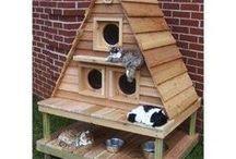 katten huis