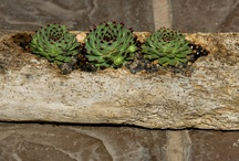 Succulent Driftwood Logs / Lovely Succulents set within driftwood from California Cactus Center
