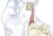masáže, fyzio, anatomie