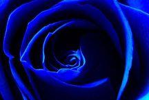 Royal Blue..