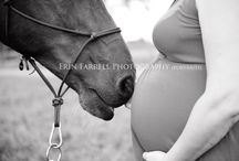 Horse & Pregnancy
