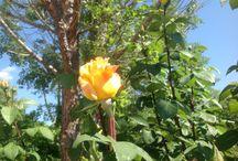 Fiori / Petali, foglie, colori. I profumi immaginateli