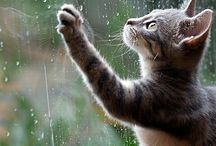 The rain....