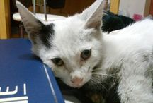 Social Conscience / Animals that were or are in need of help
