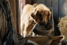 https://www.behance.net/gallery/47952951/A-Dogs-Purpose-(2017)-Full-Movie-Online-HDDvD