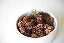 kogler/pinecones