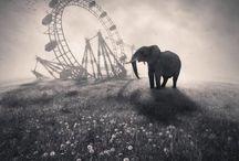 Night Circus / by Steven Parkhurst