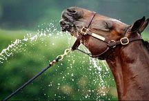 Horses--My Favorite Photos / by Mickey Betz