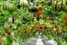 hung garden