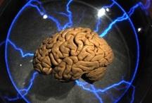 Brain Exhibition