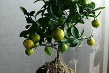 Plants / Les Plantes