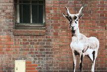 street art / by Julie Yülle