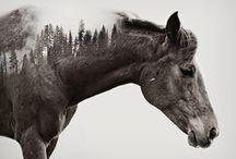 cheval double exposure
