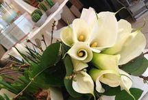 Tulip fiori e