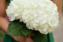 Wedding Flowers / by Alexis Nitti