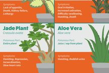 poison houseplants for animals